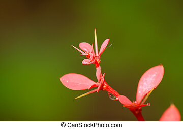 red plants in green background - closeup of pictures, red...