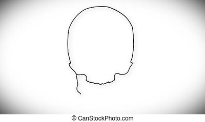 Human Skull 03 front - Human Skull structure animation...