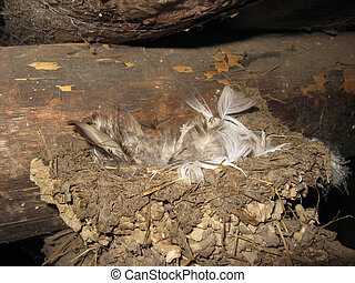 Nest of a swallow with feathers - The image of nest of a...