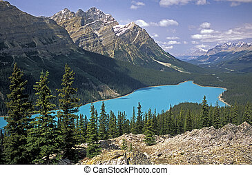 Peyto Lake Viewpoint - One fine summer's day the view is...