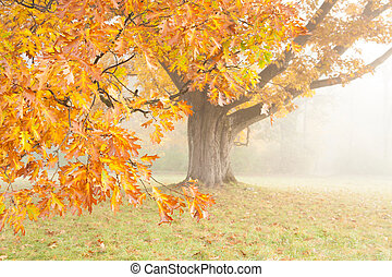 Bright yellow oak in a foggy haze