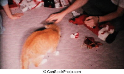 Cat Plays With Christmas Gifts-1967 - A funny calico cat...