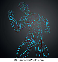 Vector Human Muscle Anatomy - Vector Illustration of Human...