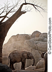 african elephant - African elephant under a baobab in a zoo