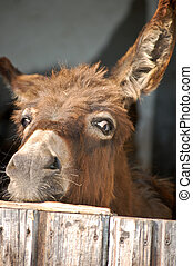 Donkey look out of a Stable