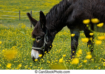 Donkey in a Flower Field