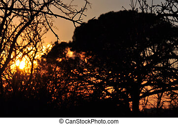 sunset colors tree branches abstract - Sunset colors...