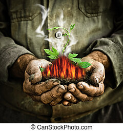 Green young plant in old man hands. Greenhouse effect and...