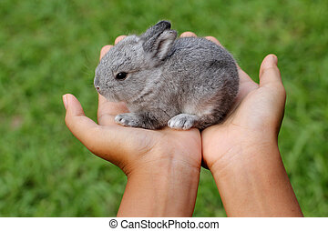 Baby grey rabbit in grass