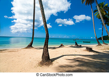 Caribbean Beach and Palm Trees - Beach, palm trees, and...