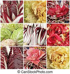 collage with images of radicchio - radicchio mix (Radicchio...