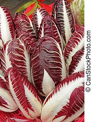 Radicchio Rosso di Treviso, variety precoce . Wine-red...