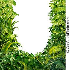 tropical, plantas, blanco, marco