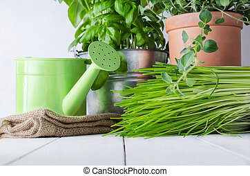 Potted Kitchen Herbs - A selection of potted home grown...