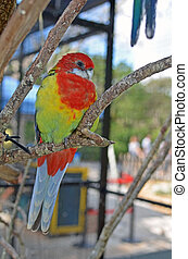 Lovebird - a lovebird sitting on a branch at an aviary in a...