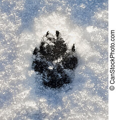 Dogs Footprint on Snow - A dog track on snow