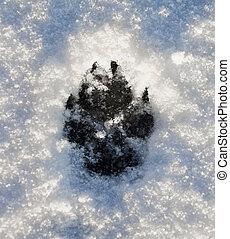 Perros, huella, nieve