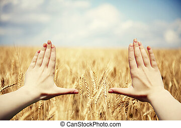 Hands frame over the wheat field