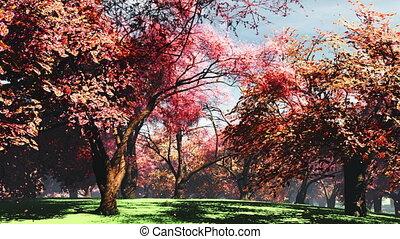 Japanese Garden 08 falling petals - Japanese Garden Cherry...