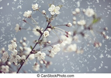 Early Spring Abstract natural backgrounds with blossom snowy...