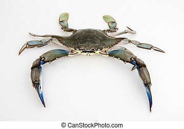 Blue crab on white background - Blue crab isolated on white...