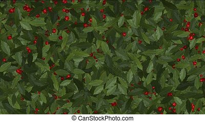 Red Winter Berries on Holly.