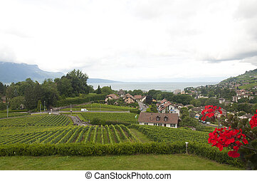 Houses amidst Vineyards - Houses amidst vineyards in Vevey,...