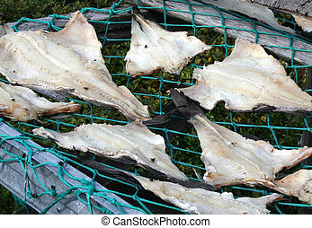 Drying Codfish - Codfish are laid out in the sun over...