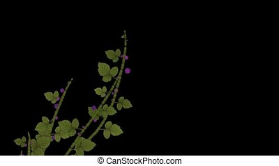 growing berries and leaves - growing berries leaves