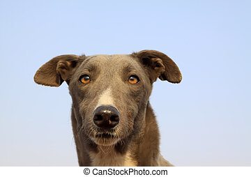 gree dogs - a dog's head in the blue sky background
