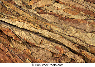 tobacco leaf - dry tobacco leaf in north china