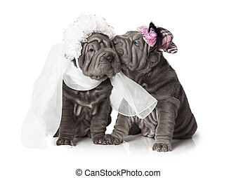 Newlywed - Two sharpei puppies dressed in wedding attire, on...