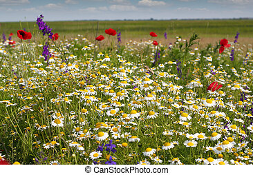 colorful meadow with wild flowers