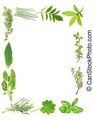 Herb Leaf Border - Herb leaf selection forming a border of...