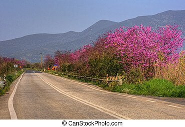 Street in Greece in spring with flowers blooming