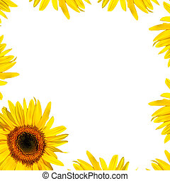 Sunflower Petal Beauty - Sunflower in full bloom and yellow...