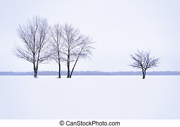Winter landscape with lonely trees in mist time
