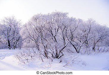 Winter forest in snow with frost on the branches