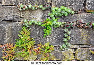 Garden wall - Plants growing out of old brick garden wall