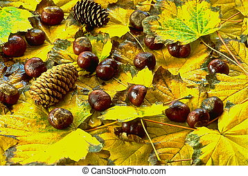 Autumn bounty - Autumn leaves with pine cones and...