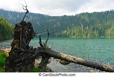 Black Lake, the Largest natural lake in the Czech Republic...