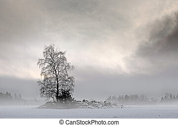 Bare tree in foggy landscape with moody sky