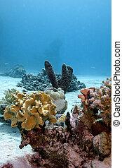 arrecife, fondo, Egipto, coral, duro, esponja, mar, Corales,...
