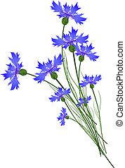 Cornflowers - Blue Cornflower Bouquet Over White Background