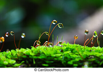 Closeup moss in forest