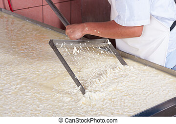 Moving fermenting milk - Cheese factory worker moving...