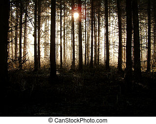 In the forest - On a cold day while sunrising.