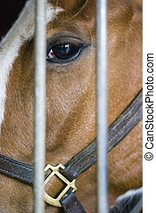 Closeup Of Horse In Stall.