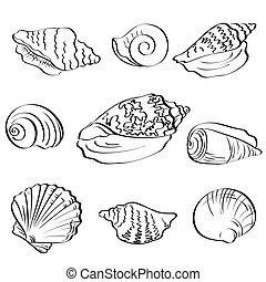 Set seashells, outline