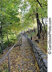 Tree / leaf lined path Fall season